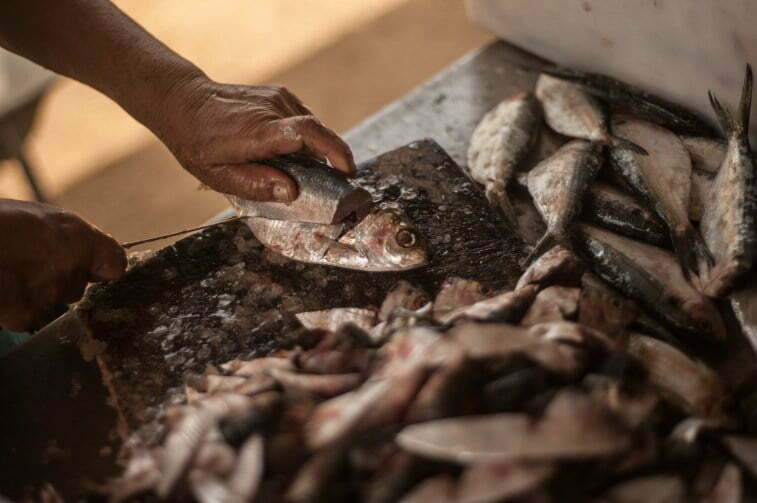 A preparaçãp do dashicô feita pelo Sr. Tarumasa Tonaki na Praia de Matariz, Ilha Grande. Foto: (No tempo do Dashicô)